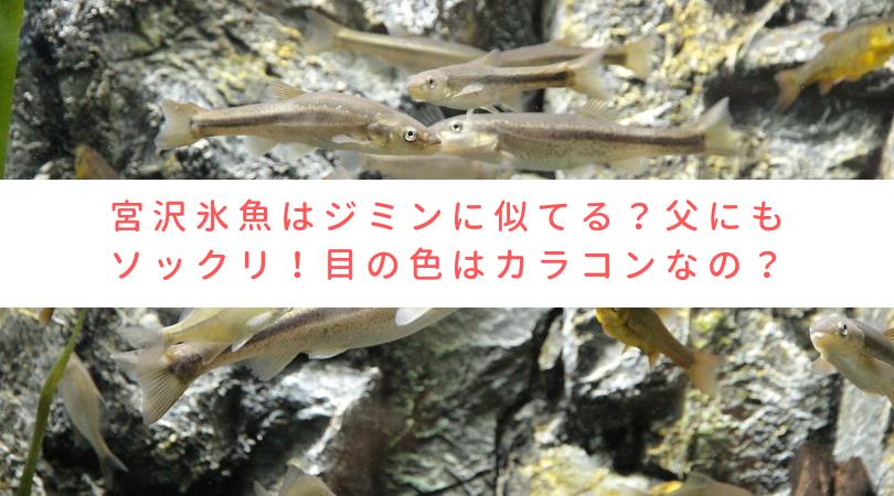宮沢氷魚はジミンに似てる?父にもソックリ!目の色はカラコン